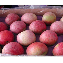 New Coming Fresh Normal Good Farmer Red Fuji Apple