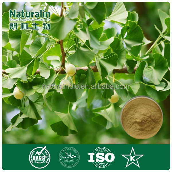 High Quality Pure Ginkgo Biloba Powder/Dried Benefits Ginkgo Biloba Leaves Extract