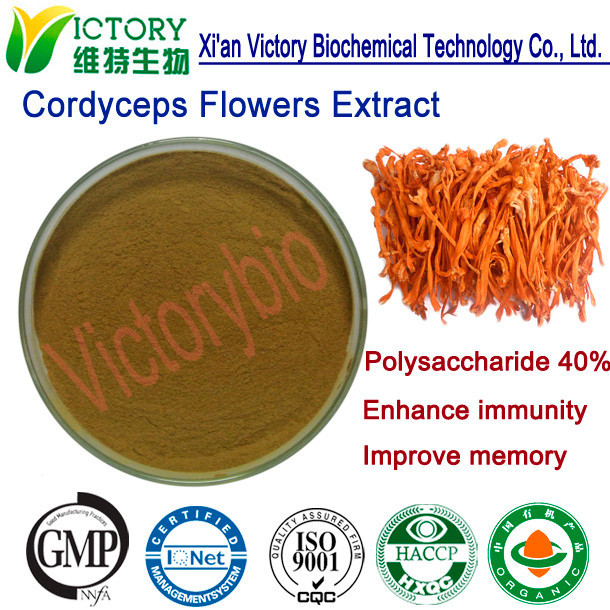 Cordyceps Sinensis/Worm Grass Extract powder