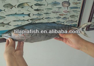 Frozen Tuna Frozen Bonito Fish with bulk cartons