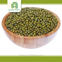 Brand new bulk green coffee beans with high quality kacang hijau