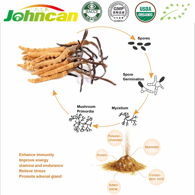High Quality Organic Unique Health Care Product Cordyceps Sinensis Extract