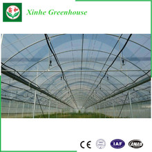 China Factory Glass Hydroponic Plastic Film Green House for Tomato