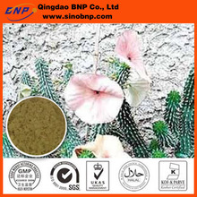 Weight loss Product Hoodia Gordonii Cactus Extract,African Cactus Extract