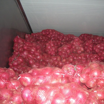 Fresh onion price/new crop harvest