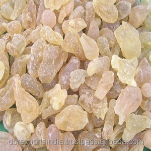 Frankincense Oil in Bulk