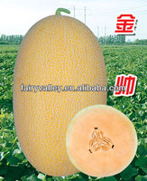 Hybrid F1 Golden Yellow Sweet Hami Melon Seeds/Japanese Cantaloupe Melon Seeds For Growing-Golden Handsome