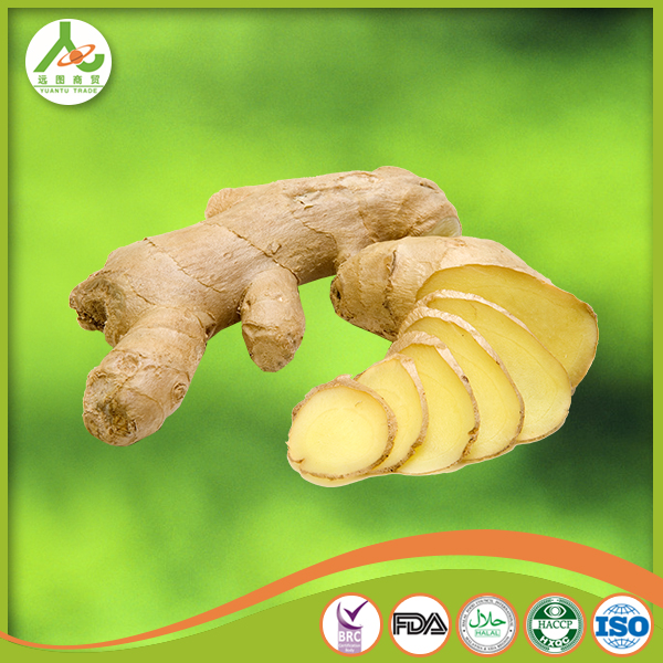 wholesale China fresh ginger exporter market prices for ginger price 2014