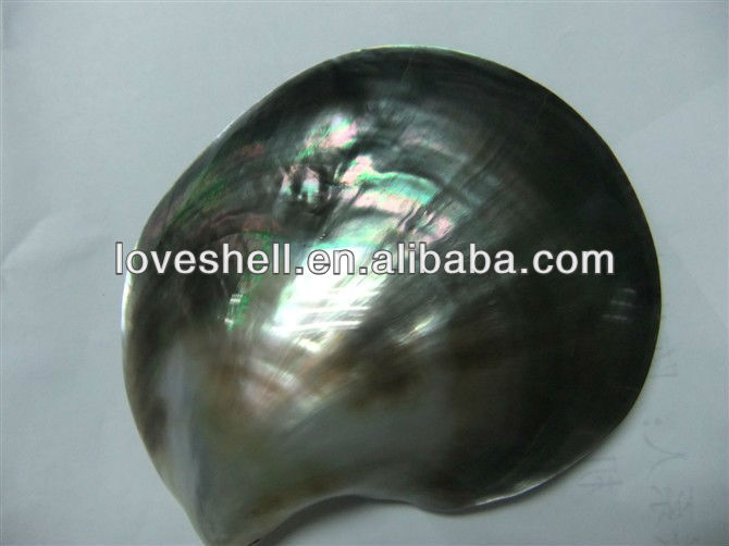polished black mother of pearl shell