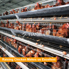 A Type Layer Breeding Poultry Equipment with Low Death Rate