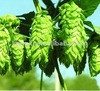 2012 Black Cohosh Extract(Cimicifugoside 8%)