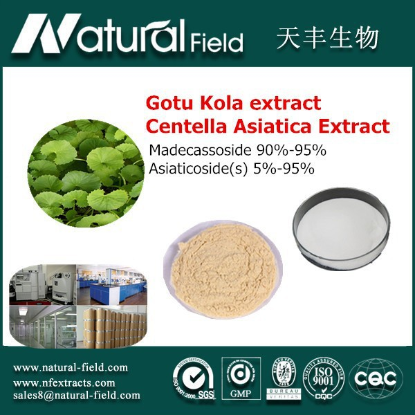 ISO&HACCP manufacturer Water Soluble Total Triterpenes 70% Gotu Kola Powder