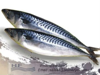 200-300g frozen mackerel frozen mackerel whole round