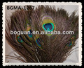 wholesale big eye peacock feather