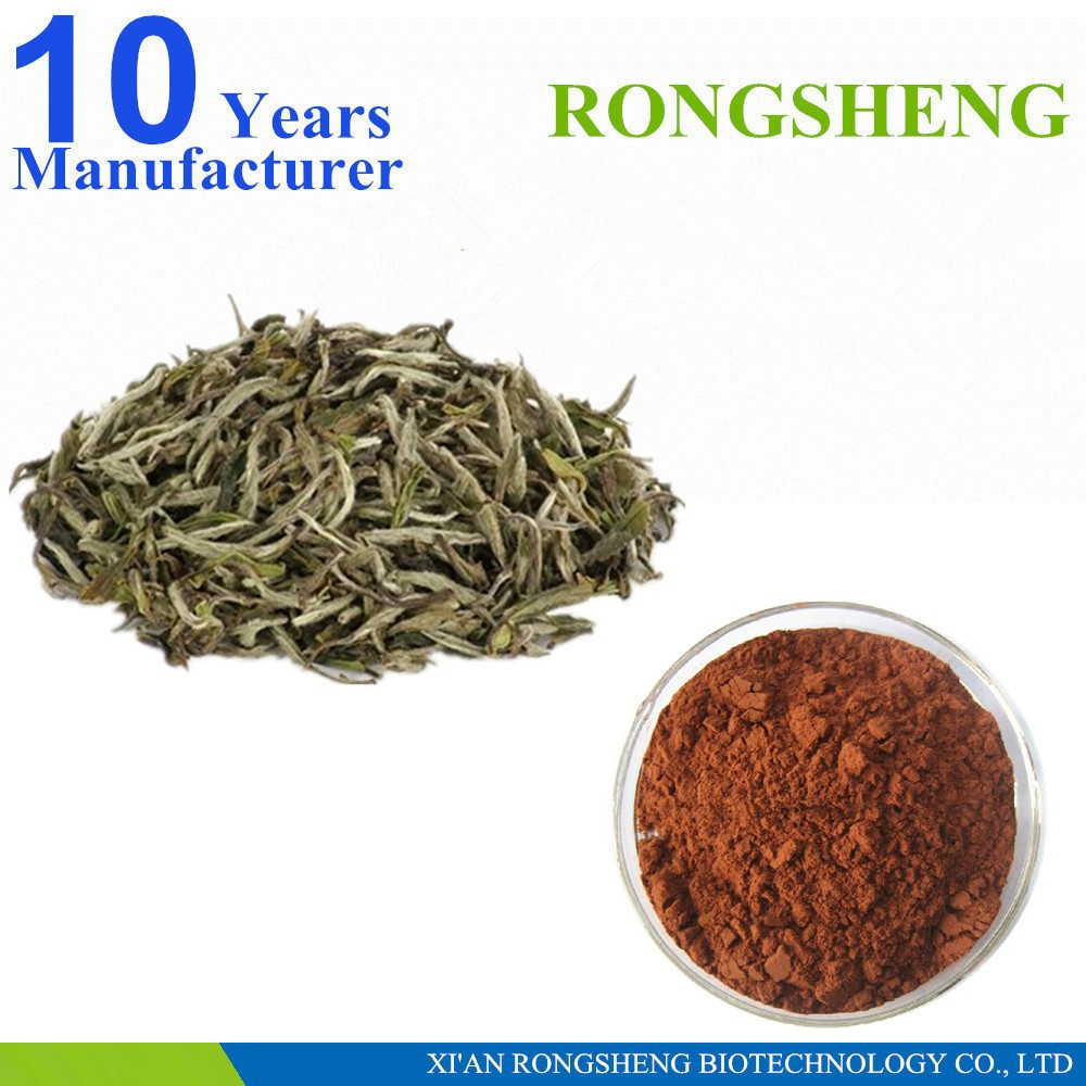 Wight Loss Product 100% Natural camellia sinensis extract