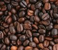 coffea bean