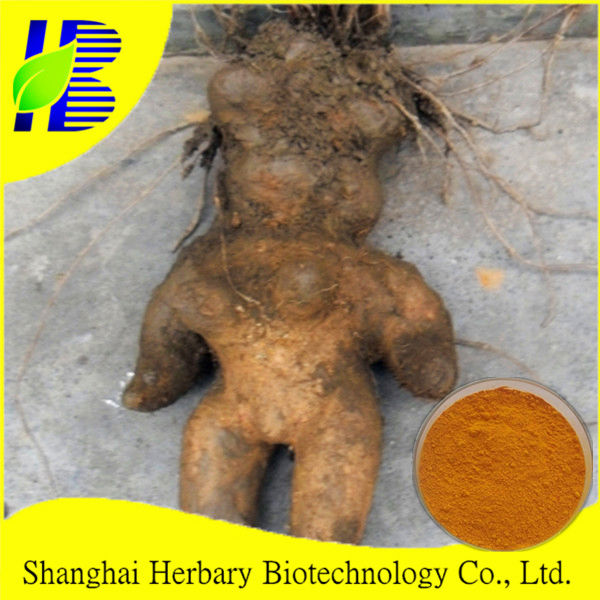 Hight Quality fo ti extract/ tuber fleeceflower root p.e.