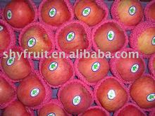 Supply shaanxi delicous red fuji