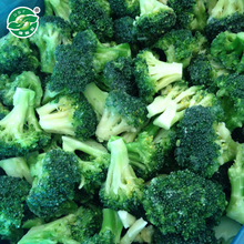 Highest quality service typical taste frozen Vegetables Brands Organic Iqf Broccoli