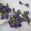high quality dried flower tea Myosotis sylvatica tea