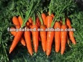 fresh carrot with 10kg carton pack