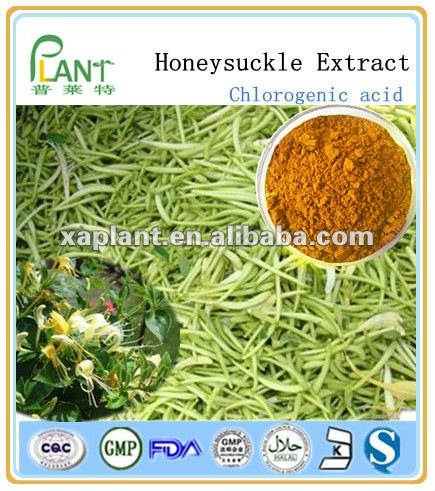 high quality extracts from Flos Lonicerae/ honeysuckle flower extract/Chlorogenic acid 4-98%