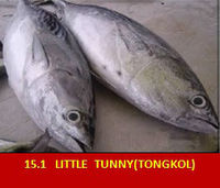 Little Tunny / Tongkol (Ikan Kayu)
