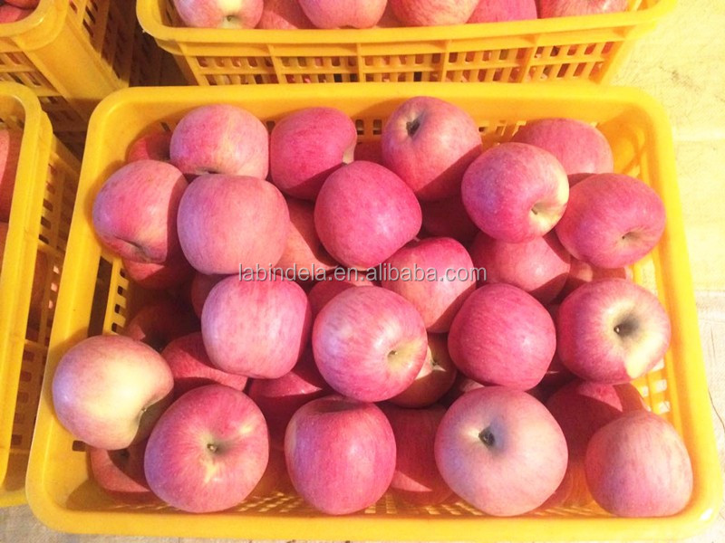 best fresh fruit Fuji apple supplier from China apple fruit