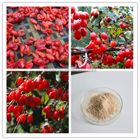 Supply-Fructus Corni Extract/Fructus Corni Extract Powder/Natural Fructus Corni Extract