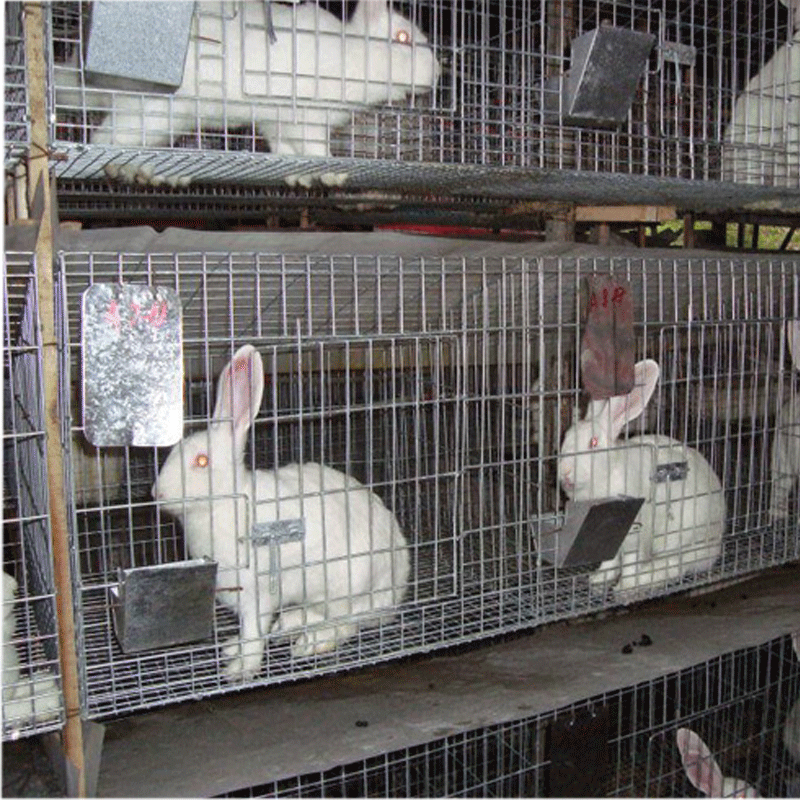 Automatic poultry farm equipment for rabbit cage