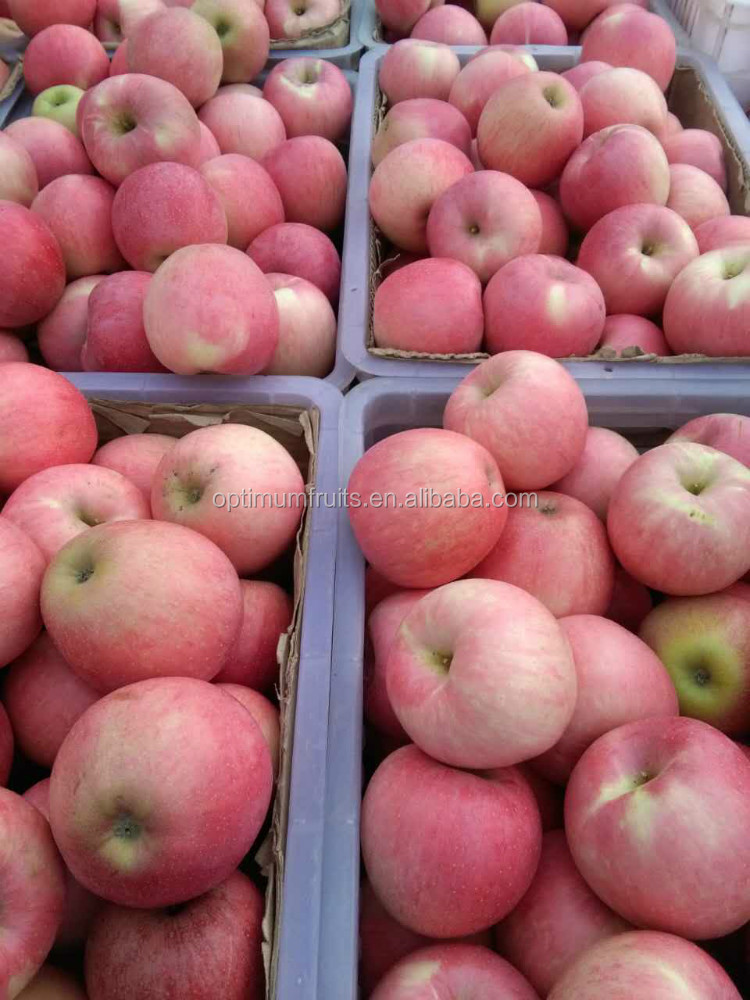 2015 NEW HARVEST Chinese fresh Qinguan apple