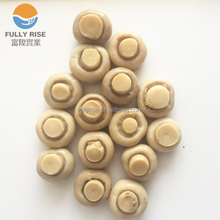 High quality canned whole button mushroom white
