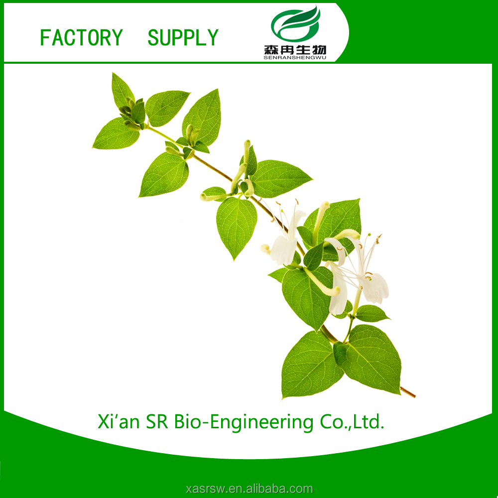 SR 25% 80% 98% Natural Chlorogenic Acid Extracts From Flos Lonicerae
