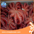 Custom HACCP fresh delicious frozen cooked octopus