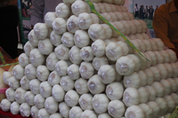 2014 crop snow white garlic for sale