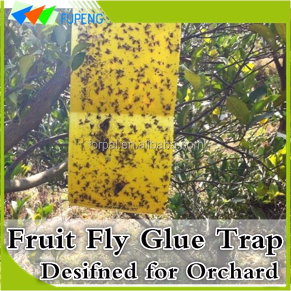 FUPENG Low Cost Reduce Pollution Hot Fruit Fly Trap Flying Insects