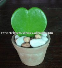 Hoya Plants,hoya leaf heart shape live fresh plant gift and florist ideal