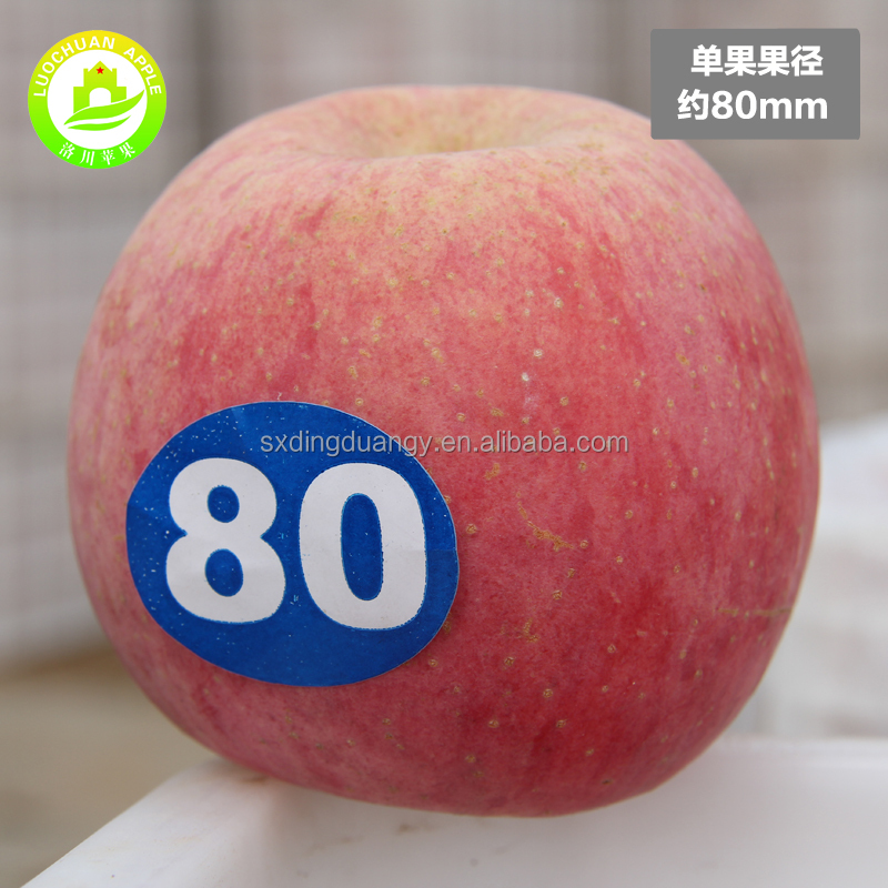 2017 High quality shaanxi exports red apples fresh fruit importers