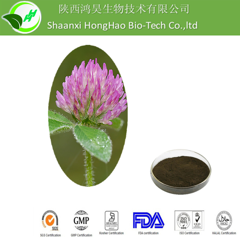 KOSHER Pure Natural High Quality Isoflavones 20% HPLC Trifolium pretense L/red clover extract hair loss