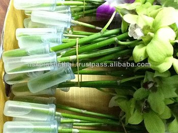 plastic vial for fresh cut dendrobium Orchid