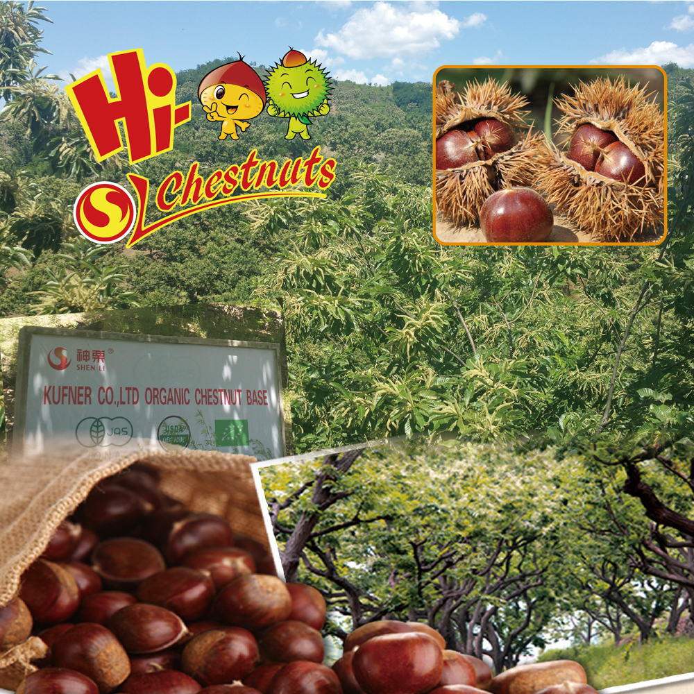 IQF Grade A Organic Frozen Peeled Chestnut