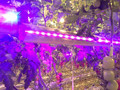 75w Bi-direction LED Hydroponic Grow Light, IP65, Grow Tomatoes, Pepper, Fruits