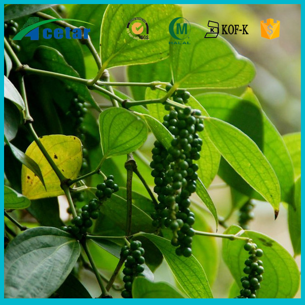 High quality plant extract black pepper specification origin of black pepper free samples