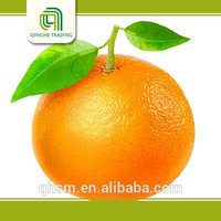 Hot selling citrus fruits with great price unique best printed t shirts