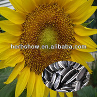 F1 Hybrid Sunflower seeds for Home and garden