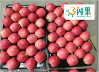 fresh red bagged Fuji apple from china for sales