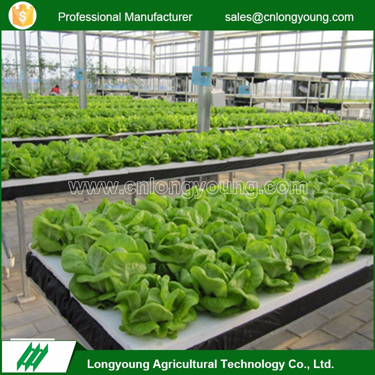 2017 Professional venlo shape vegetable and fruit agriculture poly greenhouses