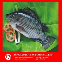 frozen tilapia whole round Niloticus