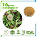 Factory supply Dandelion Extract 4:1 TLC