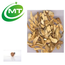 Chinese herb Hot Wholesale 1%ligustilides Angelica Extract(Dong Quai Extract)